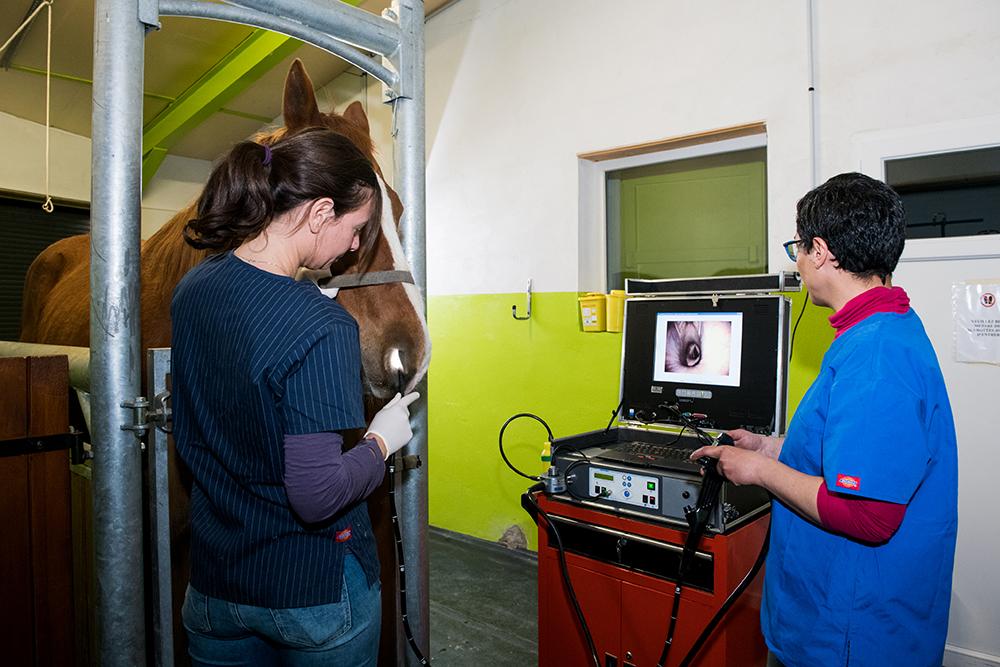 Endoscopie équine Equisarda